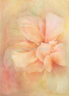 16 textured flower images and an interview with Teresa Pople. Teresa uses textures in a delicate, painterly way with delicious colors. Shades Of Peach, Peach Blush, Peach Colors, Soft Colors, Flower Images, Flower Art, Peach Blossoms, Just Peachy, Pretty Pastel
