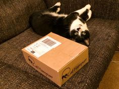 """Lily wants me to open her @CatHampurr that has just arrived."""
