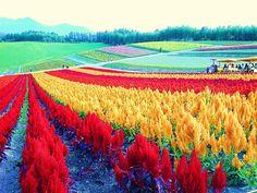 Biei  Hokkaido Japan