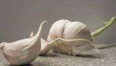 Tapar el ombligo | La Ley de la Atraxión Garlic, Health Fitness, Karma, Wordpress, Website, Natural, Amor, Thyme Essential Oil, Belly Button