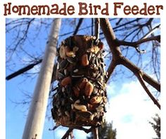 DIY not just for dogs but all pets! Here is a great, easy homemade bird feeder for kids to make!  | Wholistic Pet Organics |