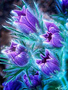 Sparkling and Moving Purple Flowers - gfi flowers - Blumen & Pflanzen Flowers Gif, Purple Flowers, Beautiful Flowers, Gif Pictures, Images Gif, Beautiful Gif, Beautiful Pictures, Animation, Beau Gif