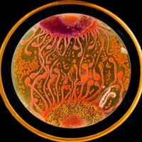 Science art!! Agar Art Winner 2015 thumb