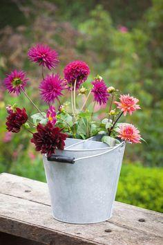 Plastic Flowers, Metal Flowers, Cut Flowers, White Flowers, Simple Flowers, Beautiful Flowers, Chocolate Bouquet, Flower Farm, Brighten Your Day