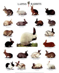 Image detail for -Rabbits, lots of them. We want to fix Cholla so she won't reproduce ...