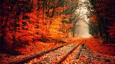 Elford Fletcher - fall autumn backround - Full HD Backgrounds - 1920 x 1080 px