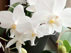 tagesretterin: Blütenpracht