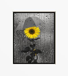 Yellow Gray Wall Art Photography/Sunflower/Rain/Bathroom Home Decor Matted Picture by LittlePiePhotoArt on Etsy https://www.etsy.com/listing/218821344/yellow-gray-wall-art