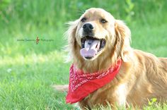 Pet Photography - Dog - Rosemount Minnesota Photographer - Jennifer Swanson Photography