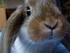 Cute Adorable Bunny Photos : theBERRY