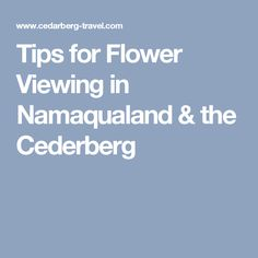 Tips for flower viewing, especially wild spring flowers in Namaqualand, Cederberg & West Coast Self Driving, Africa Travel, Spring Flowers, Travel Tips, Amp, Travel Advice, Travel Hacks, Spring Colors
