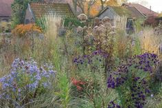 """Grasses form a matrix around colorful purple asters in Oudolf's Hummelo garden. Oudolf draws a comparison between matrix planting and fruitcake: both are shaped like rectangles, and studded with treats. Good fruitcake depends on good batter. A good matrix planting depends on background plants that are """"visually quiet, with soft colors and without striking form,"""" says Oudolf. Grasses are an obvious choice; they can occupy the space for a long perioMatrix planting Hummelo Piet Oudolf…"""
