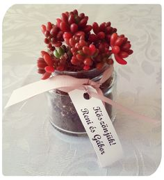 Tiny pretty succulent plant as a «Thank you» wedding gift from the couple