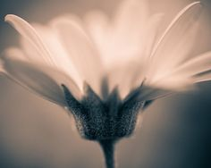 8 x 10 Print  Simply Beautiful / Fine Art by oyphotography