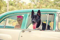 Retro, Dogs, Pet Dogs, Doggies, Retro Illustration