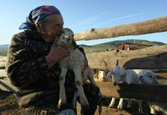 Tuva woman and her sheep.