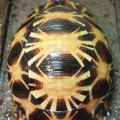 Media | Tortoise Forum