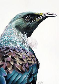Tui Bird, Nz Art, Cat Art Print, Maori Art, Rabbit Art, Rose Art, Wildlife Art, My Collection, Bird Art