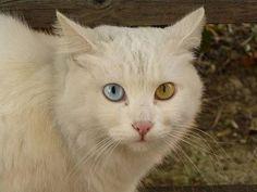 ceramic cats - Google Search