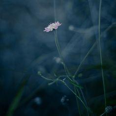Flor en penumbra by Luis Mariano González on 500px