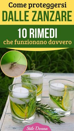 #zanzare #repellente #rimedinaturali #stiledonna Home Remedies, Natural Remedies, Mosquito Repelling Plants, Natural Cleaning Products, Mother Nature, Cleaning Hacks, Aloe, The Cure, Estate