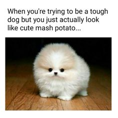 When you're trying to be a tough dog but you just actually look like cute mash potato...  Awwwww