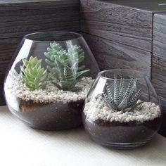 Indoor succulents with rocks