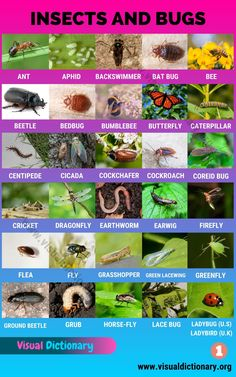 List Of Insects, Bugs And Insects, List Of All Animals, Animals Of The World, Animals Name In English, Preschool Charts, Bird Fountain, Pictures Of Insects, Animals