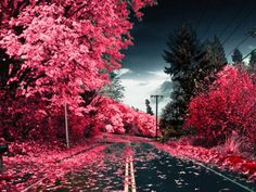 pink trees.. really? I WANT TO VISIT THIS PLACE!!