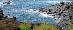 Turtle Cove: It's not uncommon to see 100+ turtles, fitting in the current to eat, and stay off the rocks. There is a waterfall that flows into the ocean, and creates a good area for turtles to feed and a safe haven from predators.