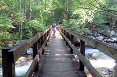 En-route to Ramsey Cascades. Ramsey Cascades is the tallest waterfall in the park and one of the most spectacular. Water drops 100 feet over rock outcroppings and collects in a small pool where numerous well-camouflaged salamanders can be found Ramsey Cascades, Salamanders, Most Visited, Water Drops, Hiking Trails, Garden Bridge, Waterfall, National Parks, Outdoor Structures