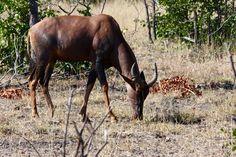 South Africa, Wildlife, Horses, Animals, Animales, Animaux, Animal, Horse, Animais
