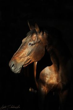 Please vote for this entry in Noworoczny konkurs fotograficzny. Majestic Horse, Majestic Animals, Beautiful Horses, Horse Portrait, Gentle Giant, Horse Head, Hello Gorgeous, Cute Animals, Head Shots