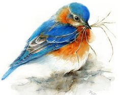 [orginial_title] – Raissa d'Alesio Eastern Bluebird watercolor painting – Giclee Print. Nature or Bird Illustration, Blue and Orange Eastern Bluebird watercolor painting Giclee Print. Owl Watercolor, Watercolor Animals, Watercolor Paintings, Watercolor Portraits, Watercolor Landscape, Abstract Paintings, Painting Art, Watercolor Flowers, Painting Prints