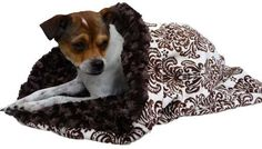 Snuggle Pup 3 'n 1 - Damask Minky/Chocolate Curly, available @ http://doggyinwonderland.com/item_409/Snuggle-Pup-3-n-1--Damask-MinkyChocolate-Curly.htm