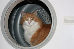 """""""There's gotta be a better way to dry wet fur...""""  Cats & dryer dangers, what to do!"""