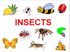 Icky Insects by Silly Bus | Funny | Kids Video | Kids Songs | Kids Music | Educational - YouTube