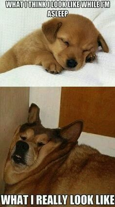 Funny dogs sleeping like us - Click on the image for more...