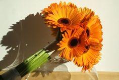 modern gerbera handtied bouquet