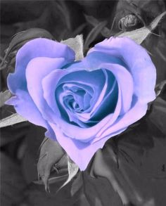 PHOTOGRAPHY ~ ColorSplashPurples