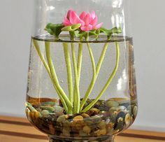 Mini Lotus Water Lily Terrarium.....I have some large vases that would work good for this probably.
