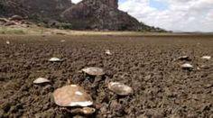PÁGINAS AO VENTO: Açude mais antigo do Brasil virou 'cemitério de cá...