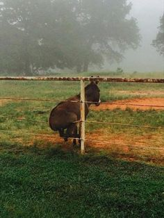 This gives a new meaning to sitting on the fence.