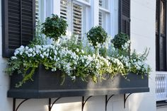 Beautiful and Blooming Window Boxes of Charleston We spent a long weekend with friends in Charleston, South Carolina enjoying some food & fun. We park the car once we arrive, walking to our destinations and dinner. Charleston is a foodie's par… Window Planter Boxes, Planter Ideas, Long Planter Boxes, Window Box Brackets, Window Box Plants, Window Box Flowers, Window Boxes Summer, Garden Windows, White Gardens