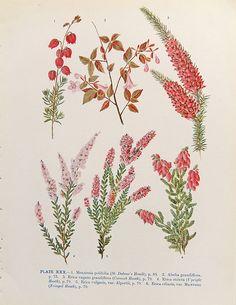 Vintage flowers prints