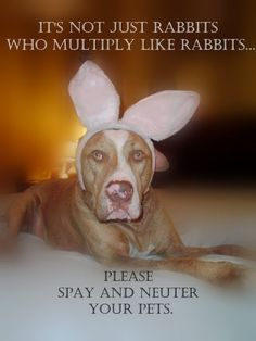 Please spay and neuter your pets!!