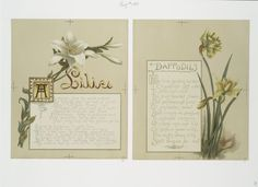 [Flower fancies: calendar with text; depicting lilies and daffodils.]
