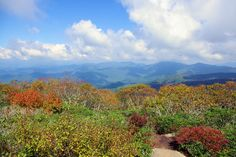Early fall color Sept 30 at Craggy Gardens on the Blue Ridge Parkway