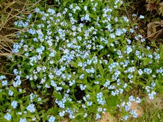 The Story in You: Sharing Your Memories: A Bouquet of Forget-Me-Nots...