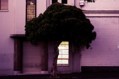 Image de tree, house, and light